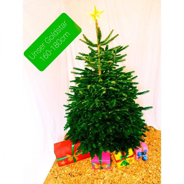 Weihnachtsbäume Goldstar